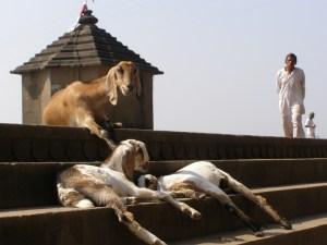 Maheshwar, India
