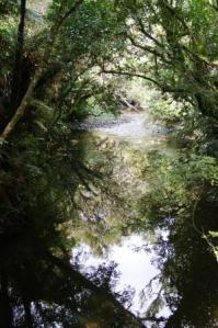 Reflections in New Zealand bush