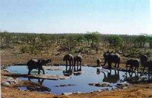 web-namibia-elephants-copy