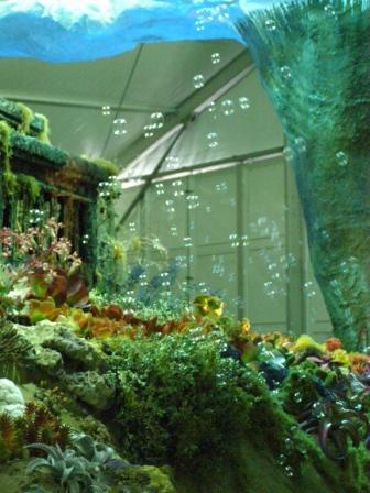 underwater garden?