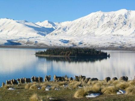 Lake Tekapo in winter (photo from Earth & Sky)