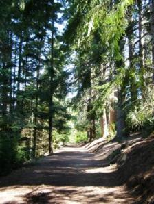 Track to top of Conical Hill