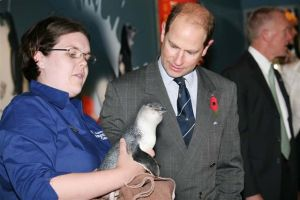 Prince Edward meets an little blue penguin