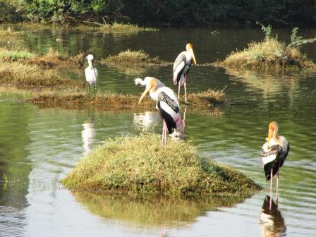 Spoonbills and painted storks
