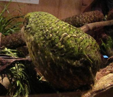Stephen Fry, a kakapo, and me