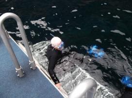 Snorkelling in NZ