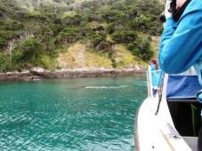 web orca IMG_6293