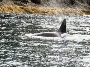 web orca IMG_6377