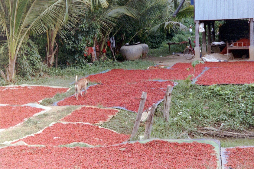 Sun dried chilli - Cambodia