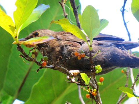 bird IMG_8849