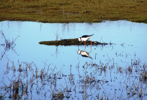 The Travel wetlands are well worth visiting in Christchurch