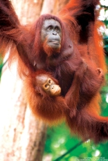 Sarawak .. music and orang-utans for me next month!