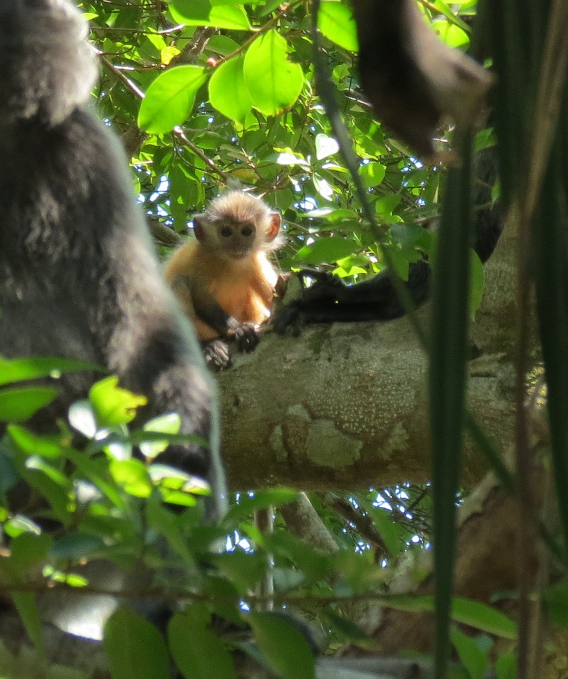 ugly animals endangered monkeys national malaysia park sarawak baby food