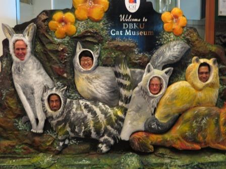 media cats