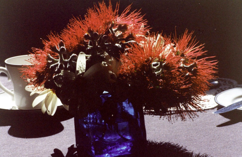 New Zealands  Christmas tree - the pohutukawa