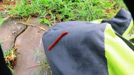 A hitchhiker on my bag!