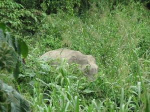 the grass is as high as  an elephants eye!