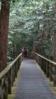 raised walkways