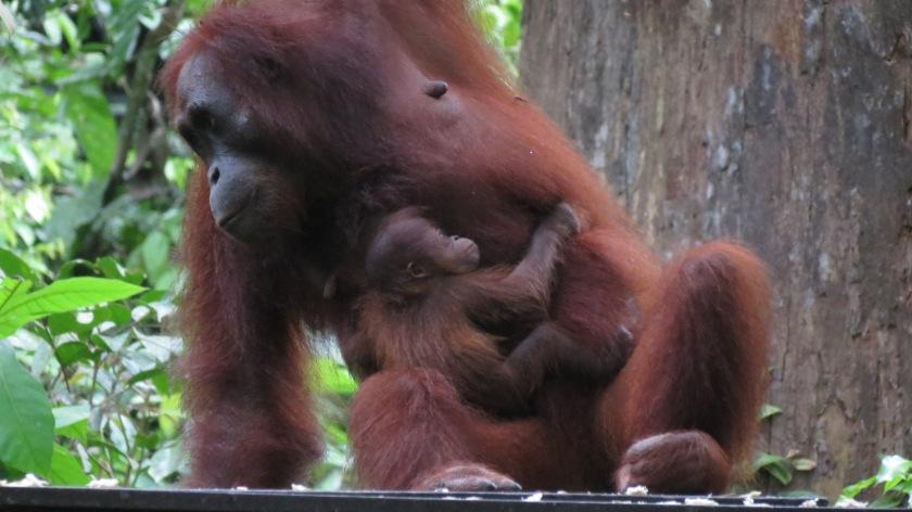 mum and baby IMG_7205