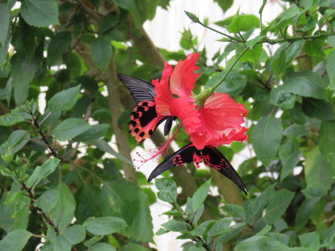 Butterflies galore inDunedin