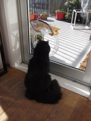 hmmm .. will I use this to go out or wait for mum to open the door?