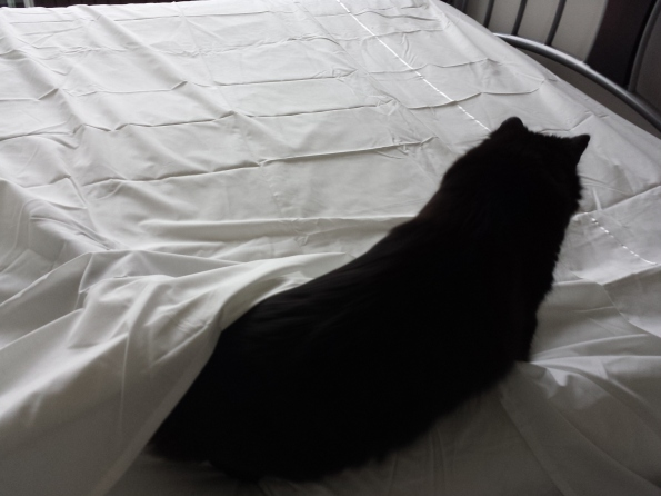 let me help you make the bed