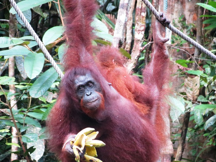 New ebook on green-eco travel. The Kiwitravelwriter explores Malaysian Borneo