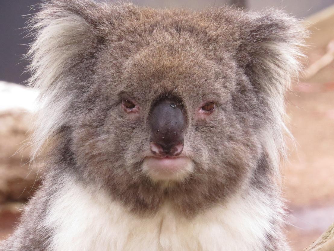 Wildlife Sanctuary – near Melbourne,Australia