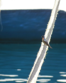 Cute little bird on a thick rope