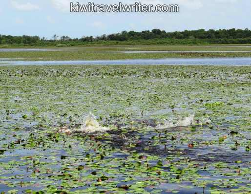 watermarked-Iweb MG_0143IMG_0143