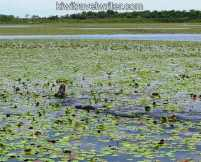 watermarked-web IMG_0142IMG_0142