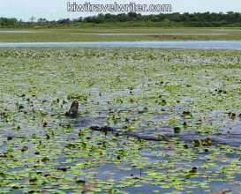 watermarked-web IMG_0142IMG_0142