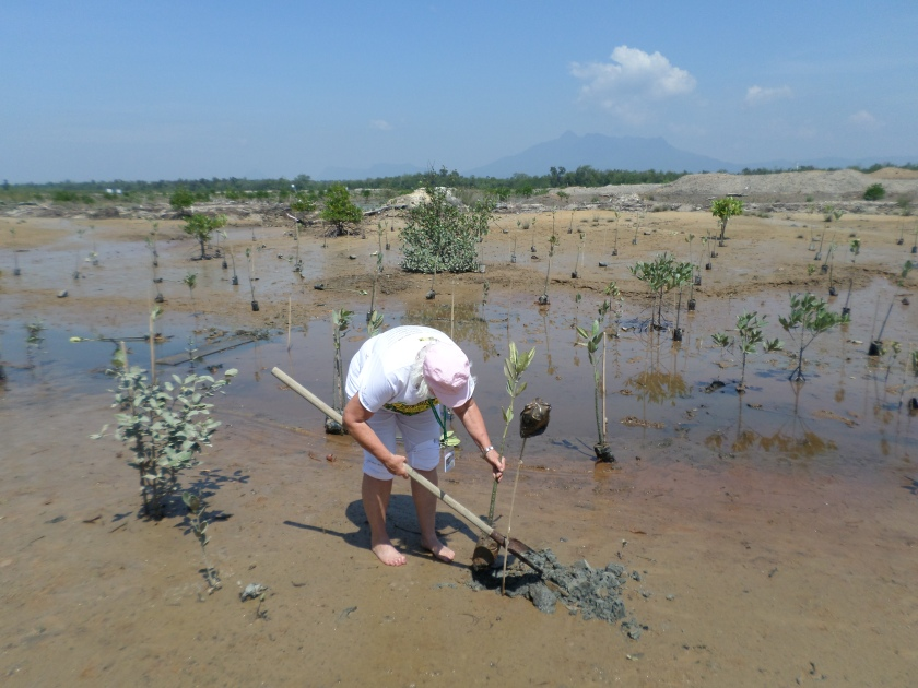getting down and dirty while planting young mangrove