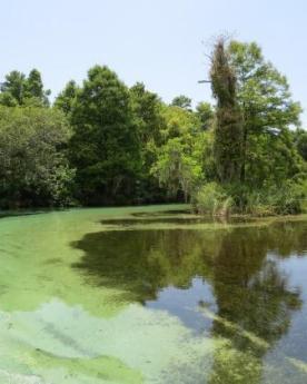 pristine water, white stone and aquatic grass
