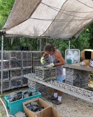 cleaning oyster cages: hard pre-season work