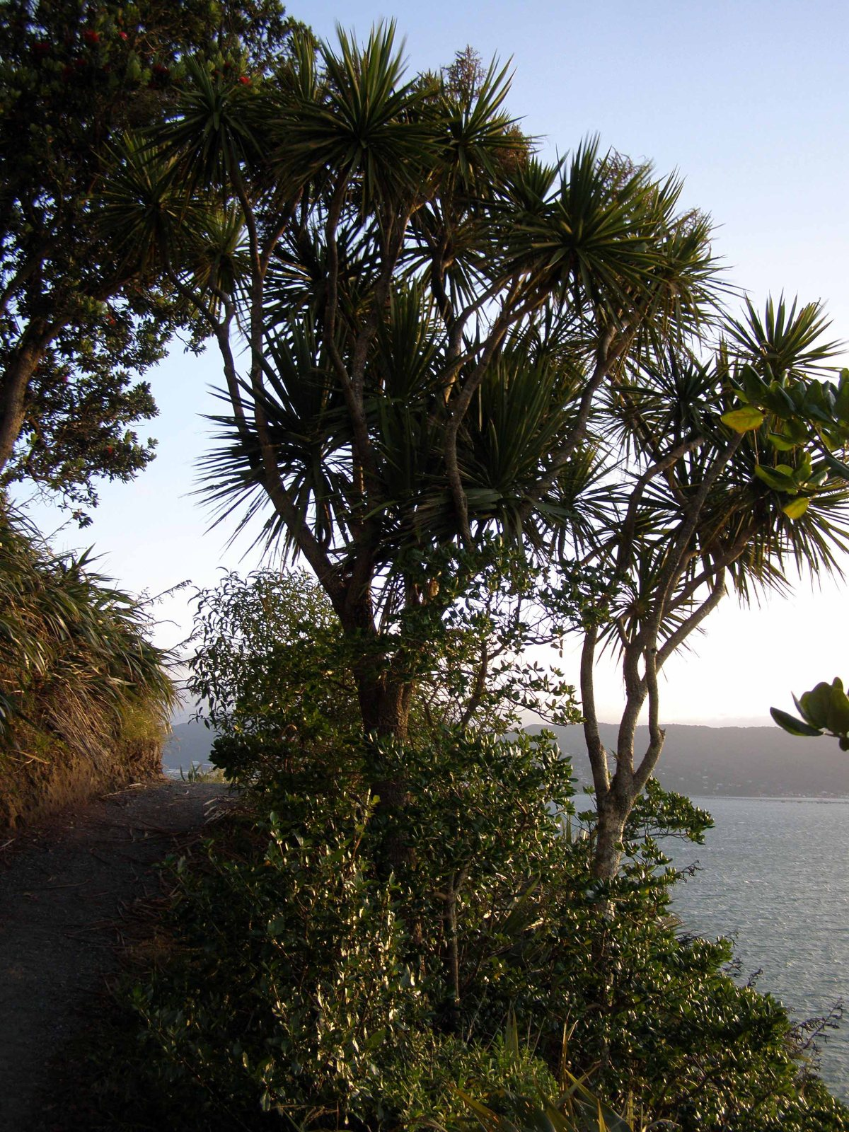 Matiu Somes Island, Wellington harbour (NZ)