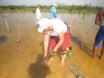 hh-planting-mangroves-before-the-annual-borneo-rainforest-world-musisc-festival-part-of-their-greening-the-festival-event-kuching-sarawak-borneo