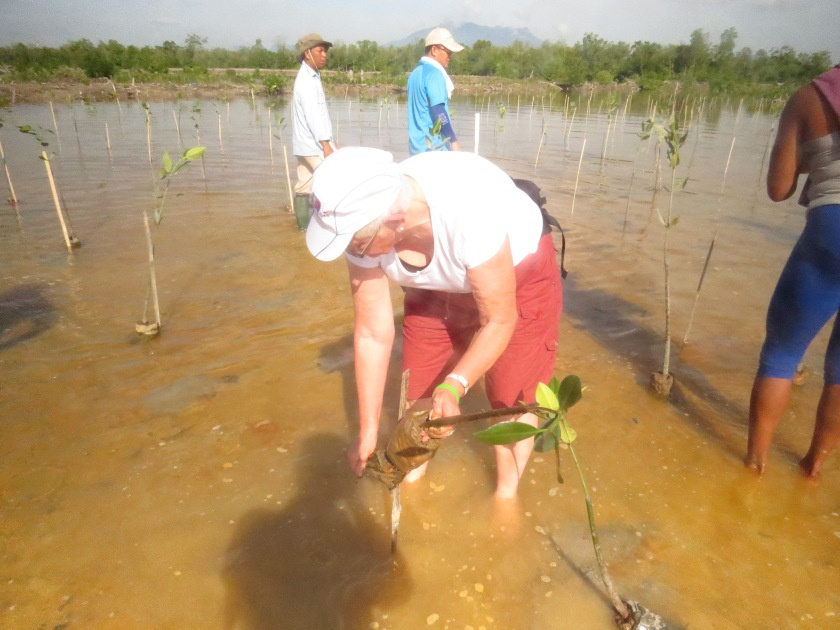 hh planting mangroves before the annual  Borneo Rainforest World Musisc Festival - part of their Greening the  Festival event Kuching, Sarawak, Borneo.JPG