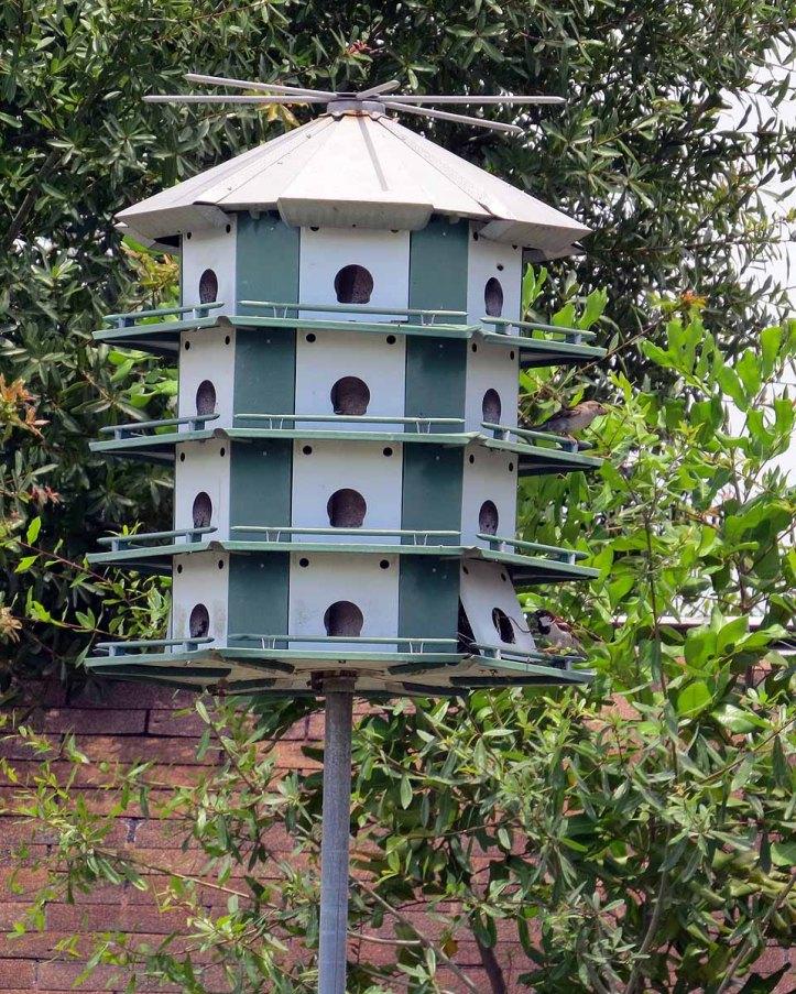 webbird-houses-are-popular