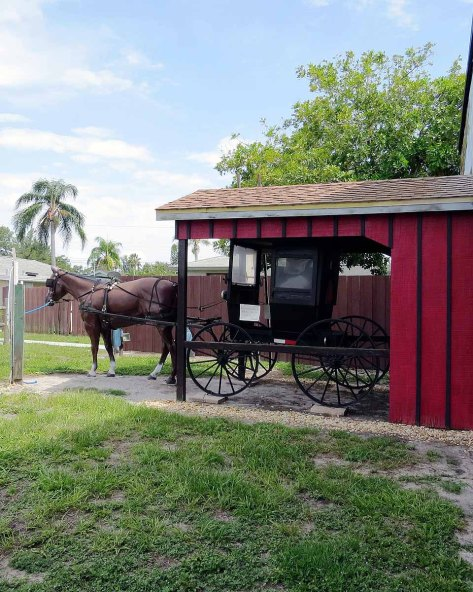 webonly-horse-and-buggy-in-town
