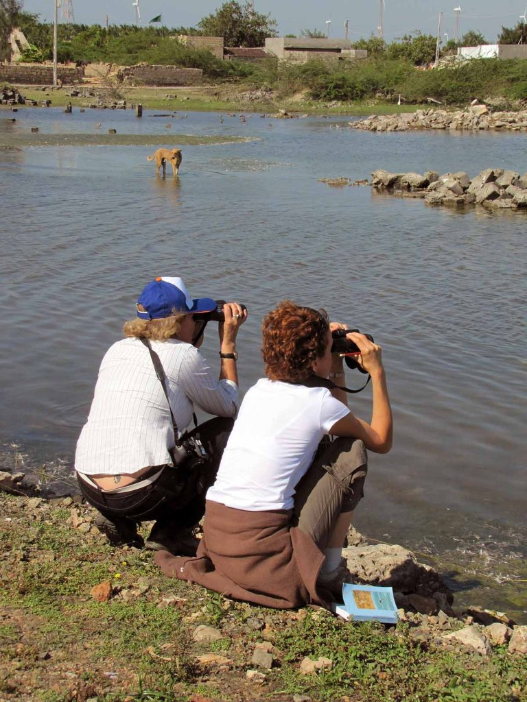 Travel writers learning to be birders