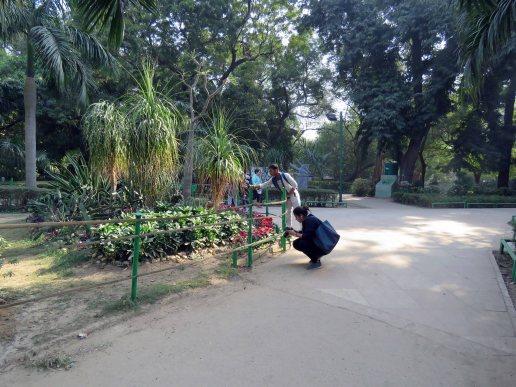 web lodhi pk flowers (1)