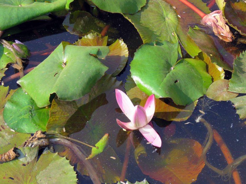 web lodhi pk flowers (10)