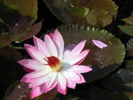 web lodhi pk flowers (12)