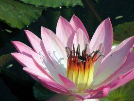 web lodhi pk flowers (14)