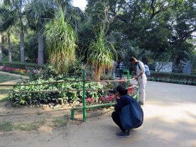 web lodhi pk flowers (2)
