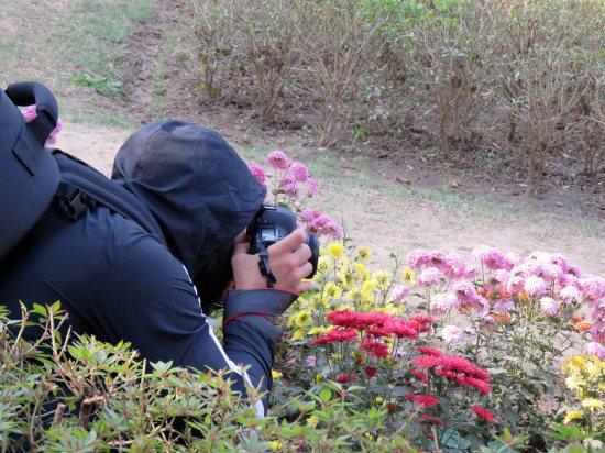 web lodhi pk flowers (3)