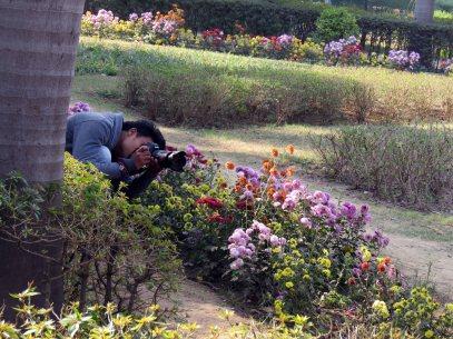 web lodhi pk flowers (4)