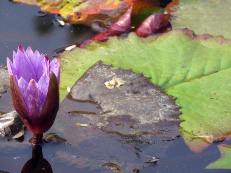 web lodhi pk flowers (6)