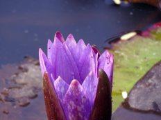web lodhi pk flowers (7)